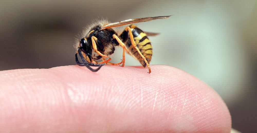 Remedies for Bee & Wasp stings